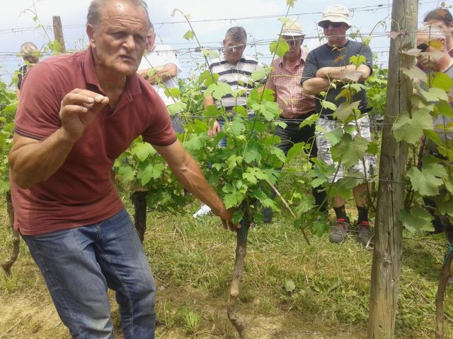 Zelena Dela V Vinogradu
